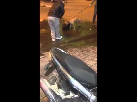 Sốc chó Pitbull cắn chết chó to giữa phố Hà Nội gây lo ngại :O