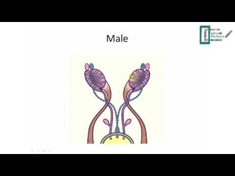 Reproductive embryology