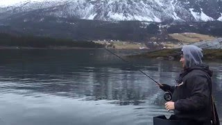 Video Sjøørretfiske i Nordfjord MP3, 3GP, MP4, WEBM, AVI, FLV Desember 2017