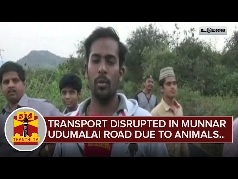 Transport-Disrupted-in-Udumalai--Munnar-Road-due-to-Wild-Animals-Crossing-Thanthi-TV