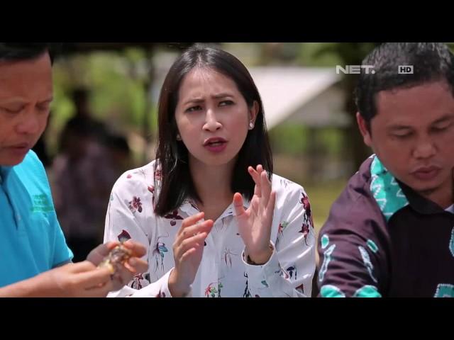 Satu-Indonesia-Bersama-Arifin-Arfan-Bupati-Tapin.html