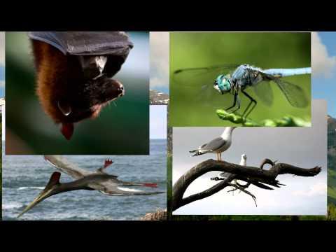 Origin of Flight — evolved four times?