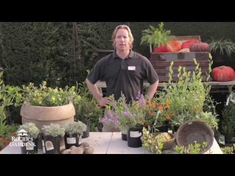 CA Friendly® Gardening Solutions | Adding CA Natives to Your Garden