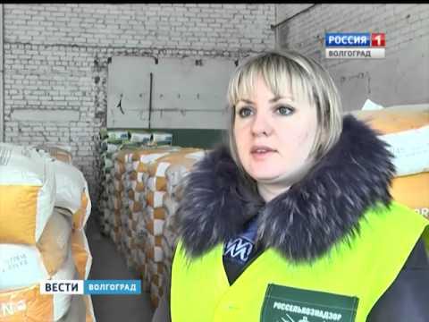 Специалисты россельхознадзора в Волгоградской области проводят тщательный контроль качества семян.