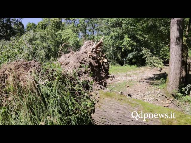 Qdpnews.it - Alberi caduti a Fontane Bianche