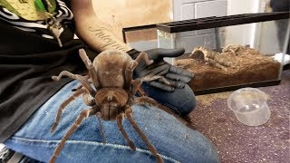 DANGER!! HANDLING THE LARGEST SPIDER IN THE WORLD!!! | BRIAN BARCZYK by Brian Barczyk