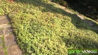 #880 Künstliche Bewässerung in den Ohme Gardens