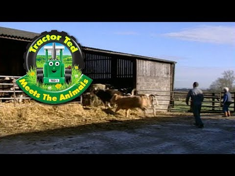 Video Trailer: Tractor Ted Meets the Animals download in MP3, 3GP, MP4, WEBM, AVI, FLV January 2017