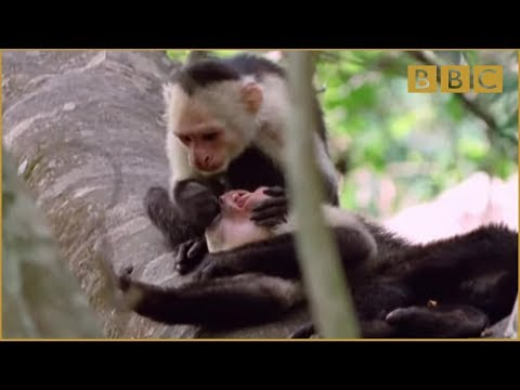talking animal - http://www.bbc.co.uk/comedy Walk On The Wild Side is a brand new comedy series that seeks to provide a long overdue forum for the views and opinions of the a...