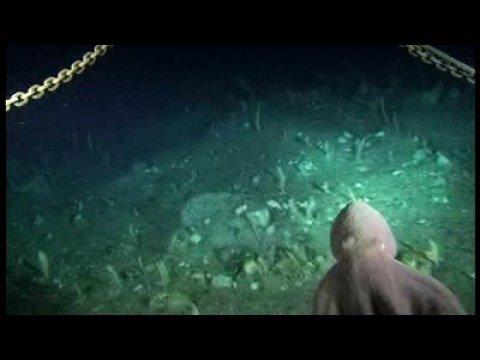 Estudio del fondo marino proyecto CEAMARC