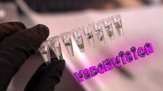 OG LAB - DIY Genetic Sex Testing - Week 2 by VaderVision