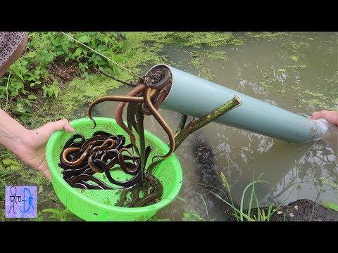 Lần Đầu Tiên Bẫy Lươn Bằng Ống Nhựa PVC & Cái Kết Bất Ngờ . Bắt Lươn Đơn Giản .Amazing PVC Eel Trap - Thời lượng: 7:49.