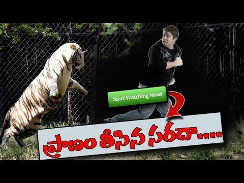 White Tiger Kills Young Man at Delhi Zoo : TV5 News