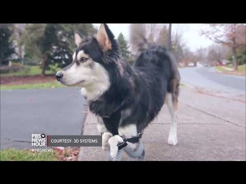 Helping animals walk again is this man's passion