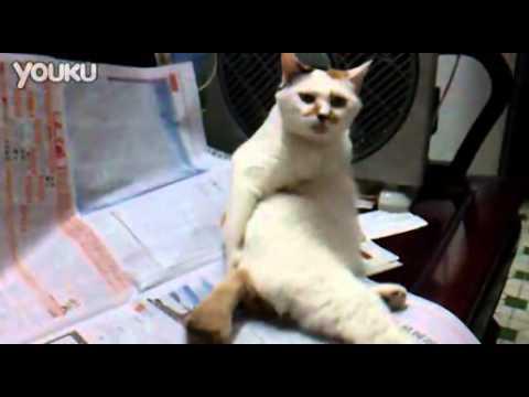 大叔貓抓癢!是學主人的嗎?