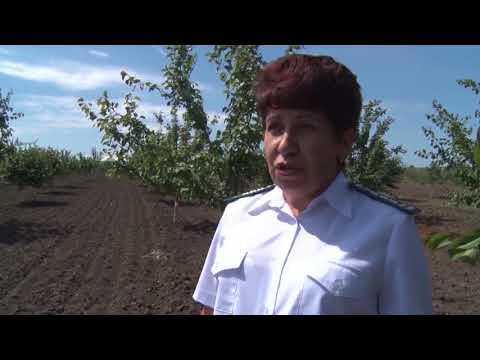 Об установке феромонных ловушек для мониторинга коричнево-мраморного клопа на территории Ростовской области