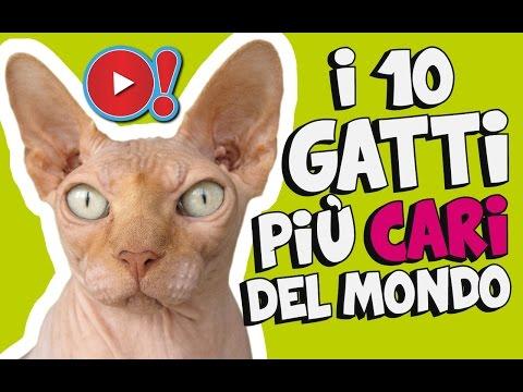 i 10 gatti più cari del mondo!