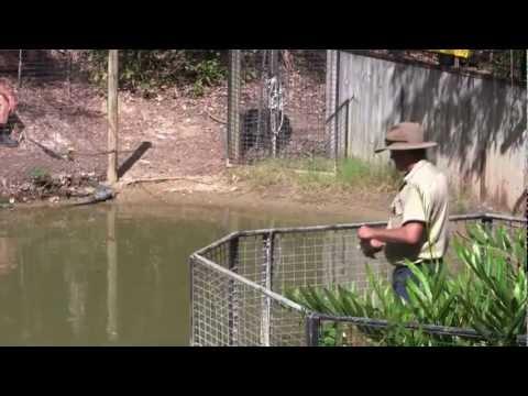 Parque dos crocodilos parte dois