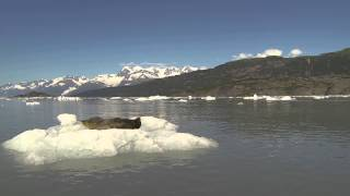 Boater Startles Relaxing Seal