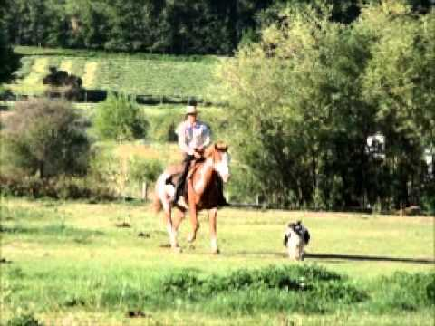 Trick riding with paint gelding for sale