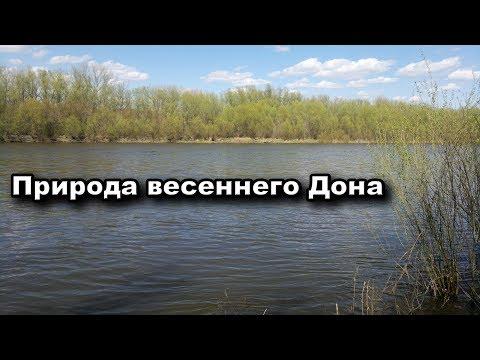 Природа весеннего Дона (видео)