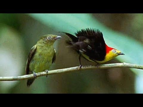 Tanssiva lintu piristää päivän!