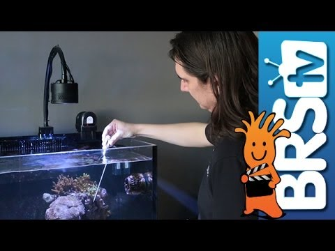 How to Calibrate your Temperature Probe EP 11: Apex Aquarium Controllers from Neptune Systems