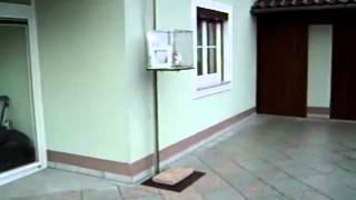 Лифт для кота