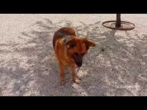 Cómo adiestrar a tu perro: órdenes básicas | facilisimo.com