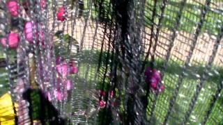 #339 Apfelzüchtung 1v10 - Selektion der Mutterbäume