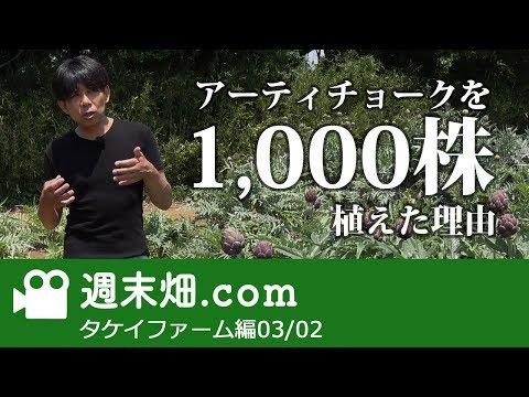 アーティチョーク1000株も植えた理由 タケイファーム編03#2 【週末畑.com】
