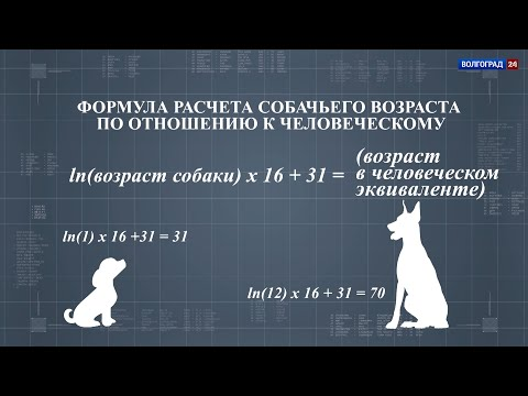Возраст собаки. 22.01.20