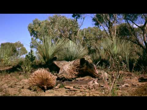 Australia: Land Beyond Time - Trailer