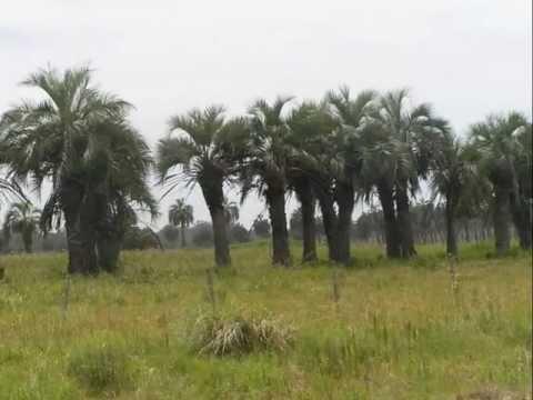 Video of Reserva Ecologica La Laguna