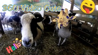 🐐Goats and Giraffe, Cute 360 vr video [Rexstick] Zoo 360 video, VR video,kids VR videos on YouTube