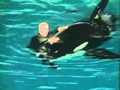 Katil balina eğitmeni böyle ölümden dönmüş