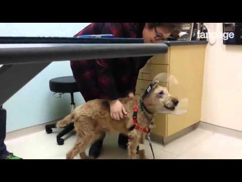 cane cieco torna a vedere: ecco la reazione quando incontra la famiglia