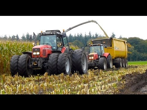 mf - Modderen in de mais hakselen bij Van Bakel Dairy (2013) - Claas Jaguar 980 + Orbis 900 12 row header - MF 8690 + USA Equipment 2000 CF - MF 7495 + USA Equipm...