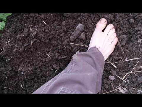 The Pleasure Of Barefoot Gardening