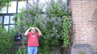 #142 Mönchspfeffer - gefilmt in Wisley