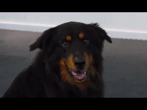 eHowPets - Follow eHow Pets for regular tips from Victoria Stilwell and more: http://www.youtube.com/subscription_center?add_user=ehowpets Victoria and Spencer demonstr...