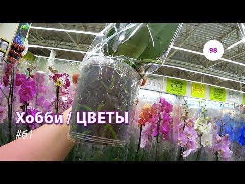 98#61 / Хобби-Цветы / 14.09.2018 - ЛЕРУА МЕРЛЕН (ТК ТРОЙКА). ОРХИДЕИ + ВАЗЫ (видео)