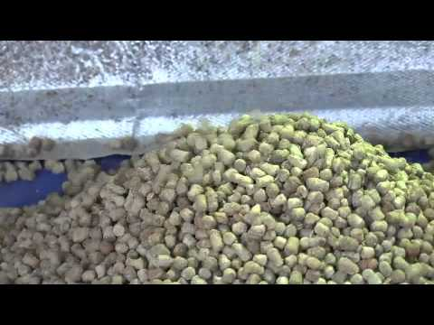 FISH FEED IN NIGERIA