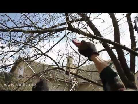 видео уроки по уходу за плодовым садом