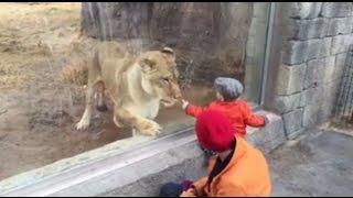 Acá un vídeo sorprendente sobre el cuidado de ser precavido al visitar estos maravillosos lugares como lo son los zoologicos! Ten mucho cuidado, la próxima v...