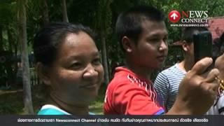 หนุ่มตรังเยี่ยมขึ้นขี่หลังฝักวัวชนแสนดุได้สำเร็จ : NewsConnect Channel