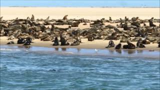 Sortie en mer à Walvis Bay