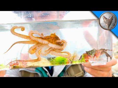 Making a Tide Pool Aquarium!_Akvárium. Legeslegjobbak
