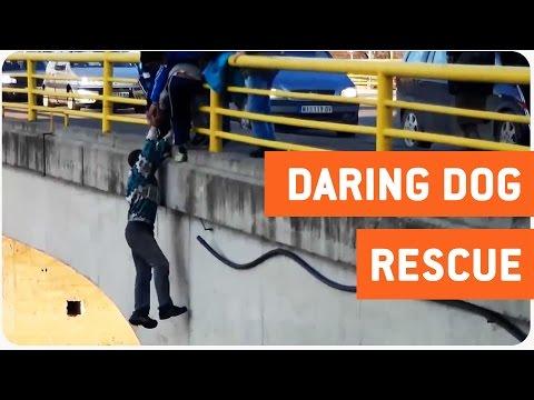 Estos extraños consiguen salvar a un pobre perro de debajo de un puente