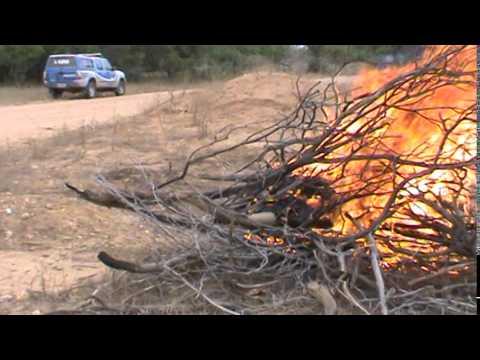 Policia Civil incinera maconha em Chorrochó-Ba